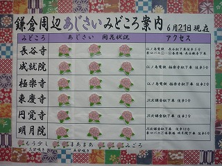 鎌倉周辺 あじさい 開花状況案内版